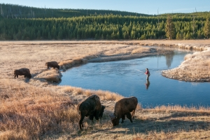 Gibbon River, Yellowstone Park