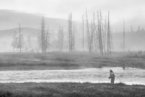 Madison River, Yellowstone Park