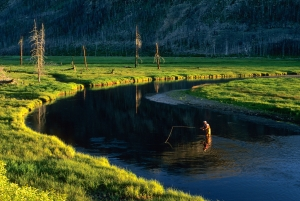 Madison River, Yellowstone Park