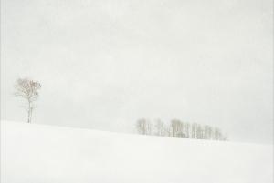 Aspen and Grove