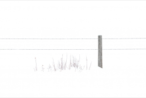Fence in Snowstorm