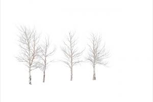 Four Aspens