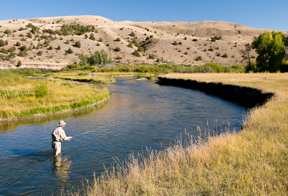 Pick a hopper any hopper for Beaverhead river fly fishing