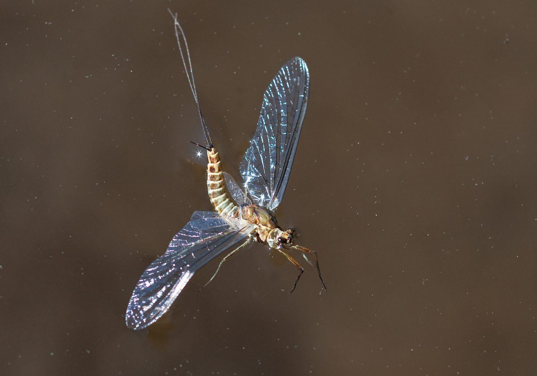 Entomology, Cut To The Bone