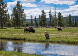 """""""Only In Yellowstone"""""""